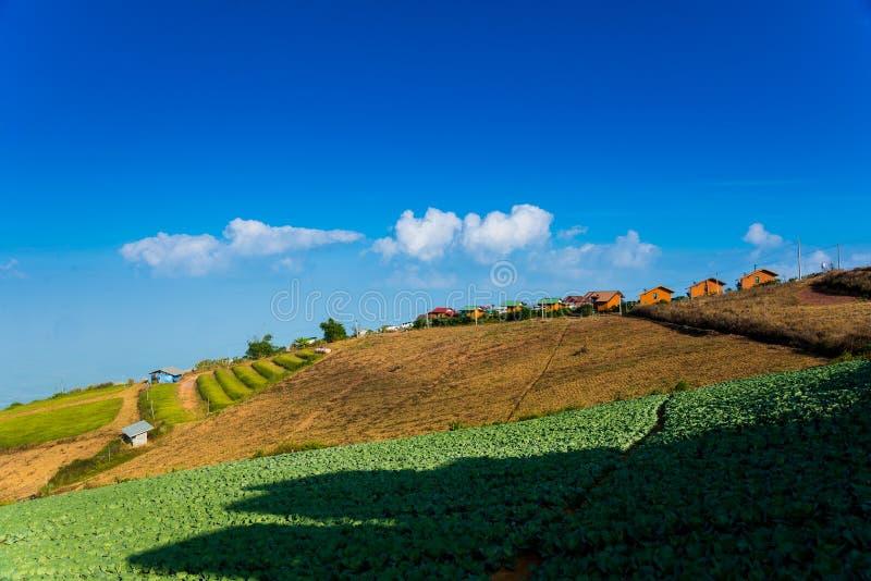 Phu tub berg-khao kho phetchabun stock image
