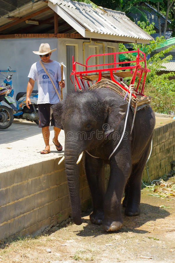 PHUKET, TAILÂNDIA - 28 DE MARÇO DE 2016: Um elefante do bebê durante o lavagem no dia quente imagem de stock royalty free