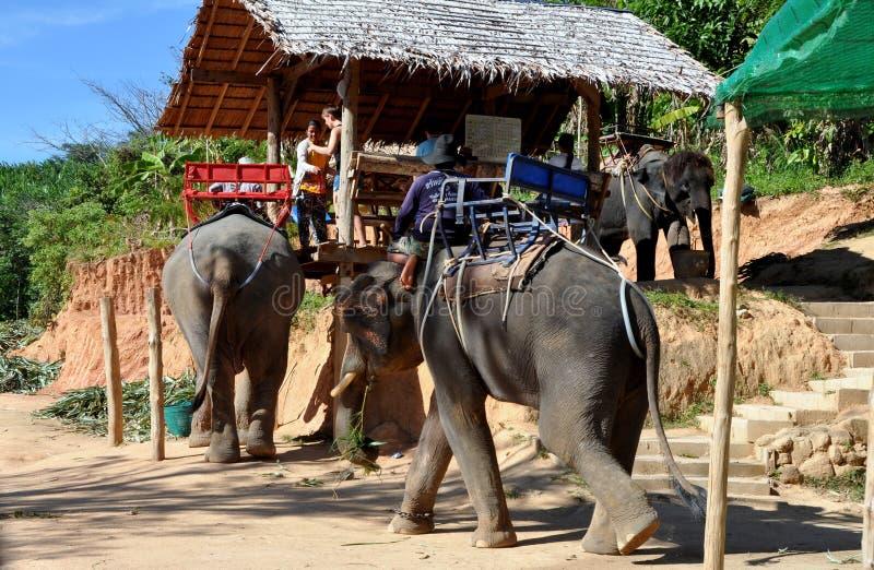 Phuket, Thailand: Elephant Trek Base Camp Editorial Stock Image