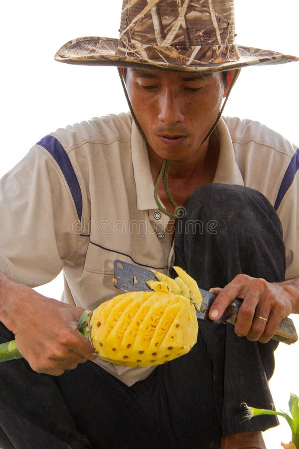 Phung Hiep, Vietnam / Oct 17, 2011: Man expertly slices a pinneaple for eating. At the floating market stock images