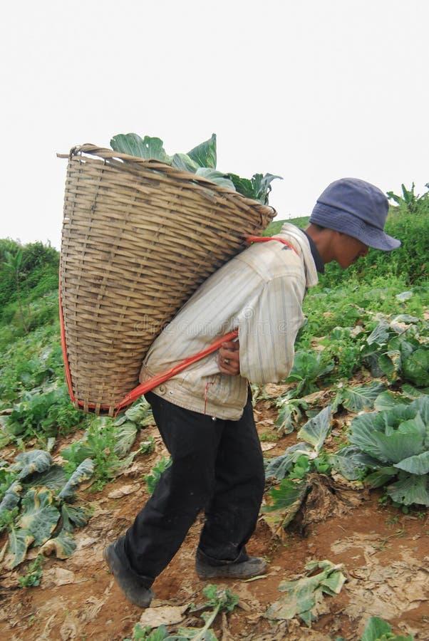 PHUTHAPBOEK PHETCHABUN ТАИЛАНД - 24-ОЕ ИЮНЯ: работа фермера в c стоковое изображение