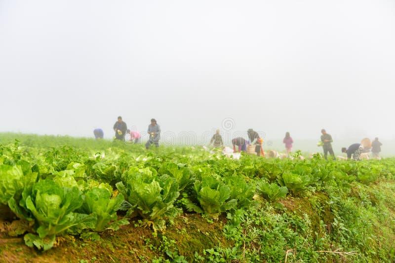 PHUTHAPBOEK PHETCHABUN ТАИЛАНД - 9-ОЕ ОКТЯБРЯ: работа фермера в стоковое фото rf