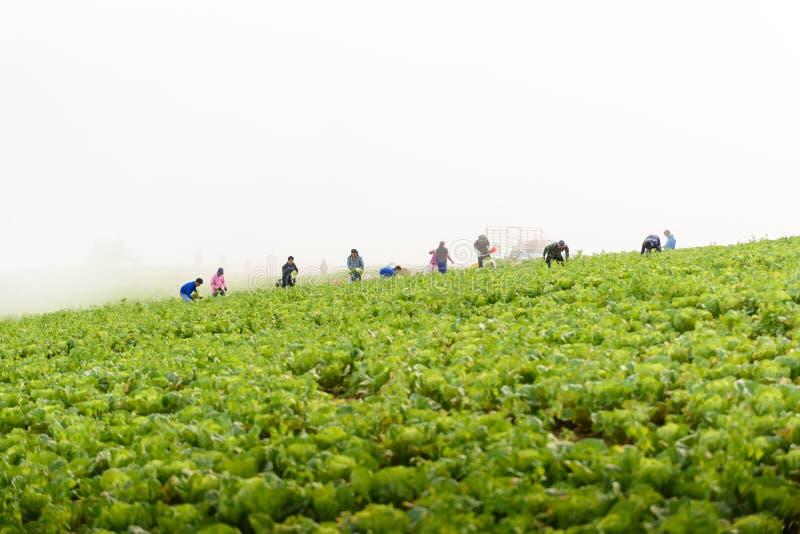PHUTHAPBOEK PHETCHABUN ТАИЛАНД - 9-ОЕ ОКТЯБРЯ: работа фермера в стоковая фотография rf