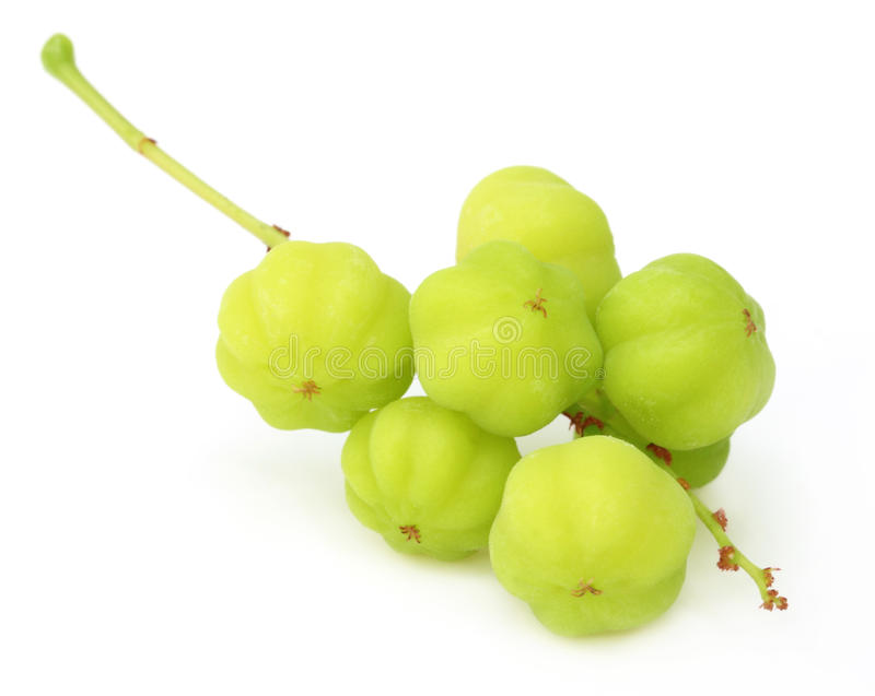 Phyllanthus Acidus Or Orboroi Fruit Stock Photo
