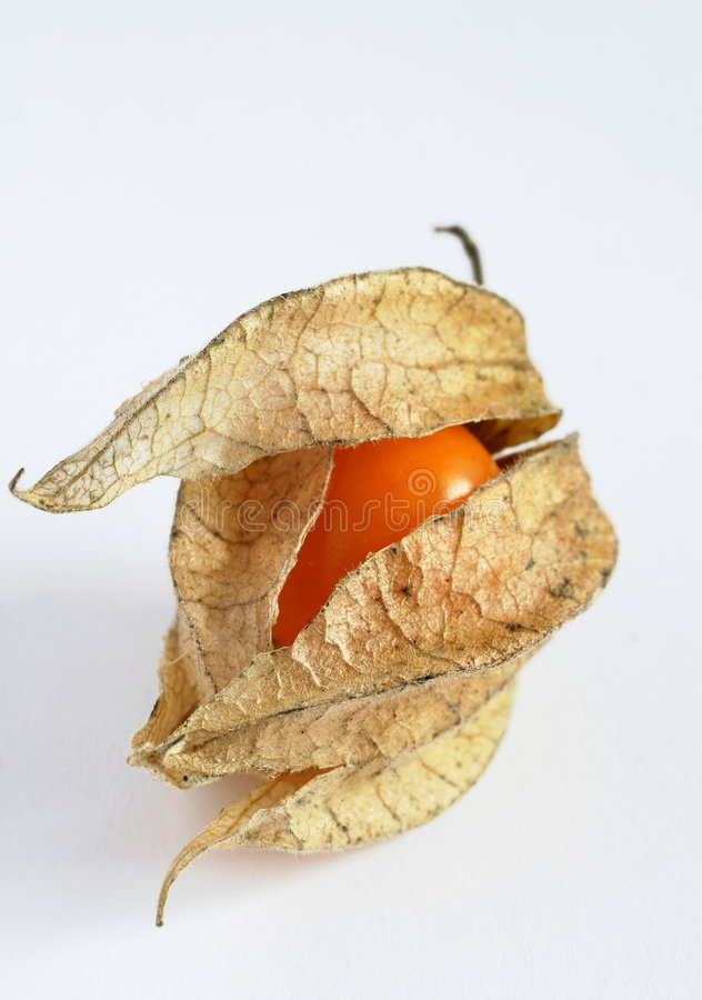Physalis. Macro shot of a ripe Physalis royalty free stock photography