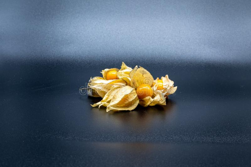 Physalis  on black background royalty free stock photography