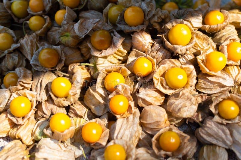 Physalis bloeit, oranje bessen in vruchten markt, India, Varanasi stock foto's