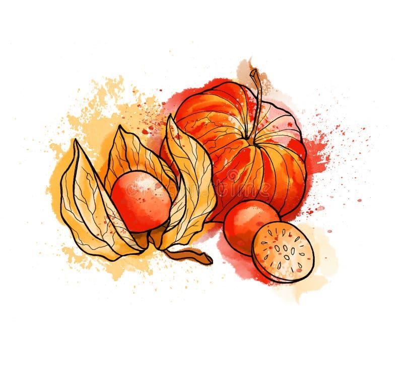 Physalis brillante colorido dibujado mano, bayas Acuarelas, blancas libre illustration