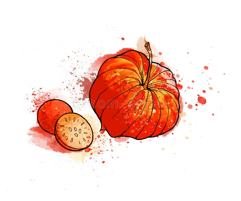 Physalis brillante colorido dibujado mano, bayas Acuarelas, blancas stock de ilustración