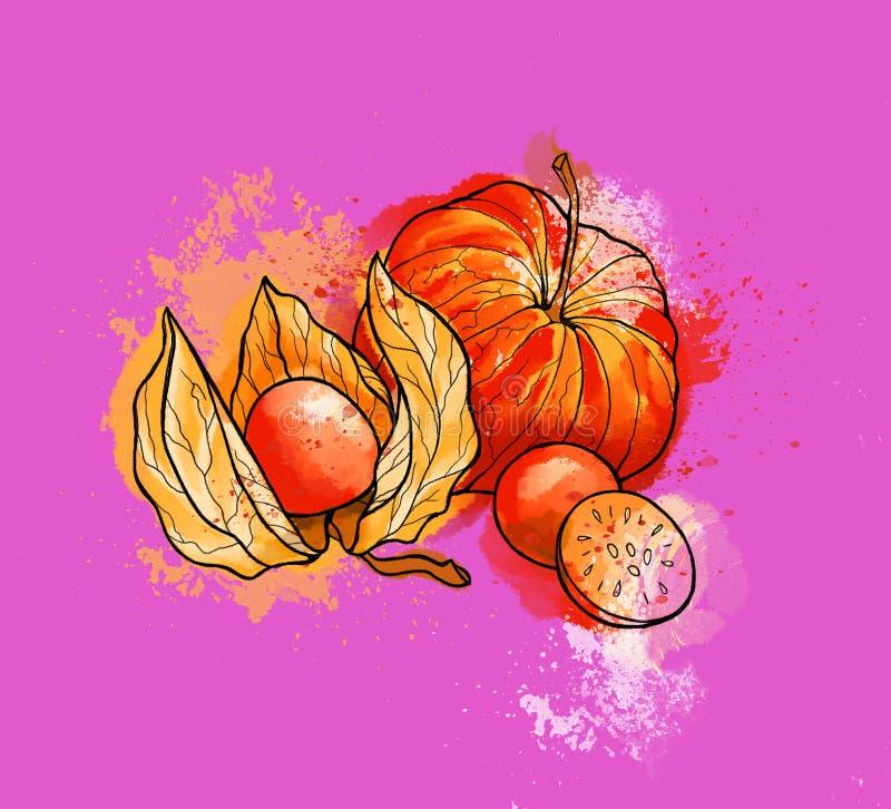 Physalis brillante colorido dibujado mano, bayas Acuarelas, purpl ilustración del vector