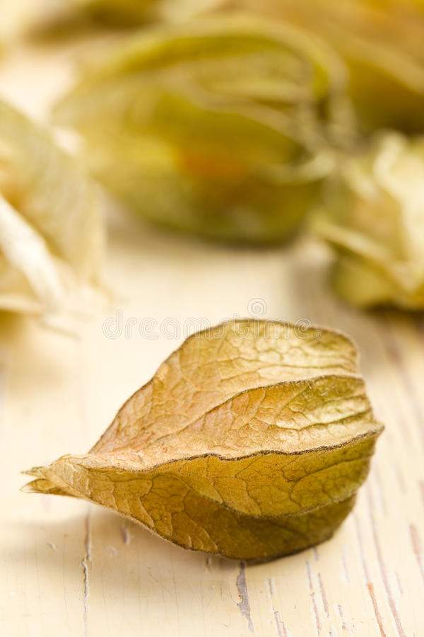 Download Physalis fruit stock photo. Image of fruit, gooseberry - 17361536