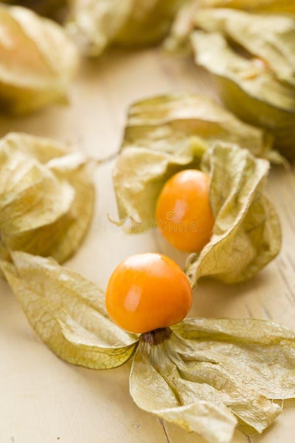 Download Physalis fruit stock photo. Image of husktomato, physalis - 17361552