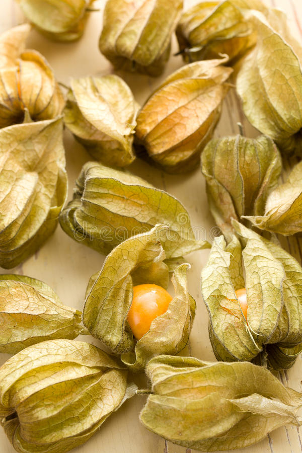 Physalis fruit royalty free stock images