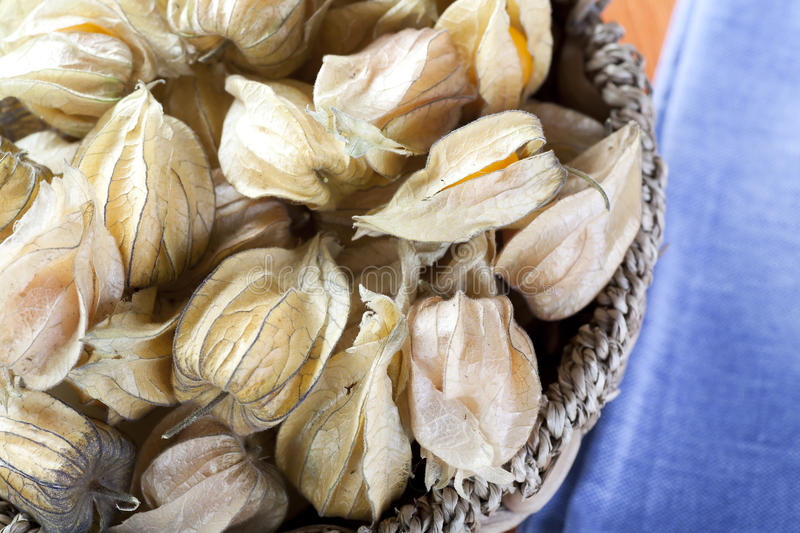 Physalis Fruit in Basket. Close up of whole physalis fruit in basket with blue napkin stock photo