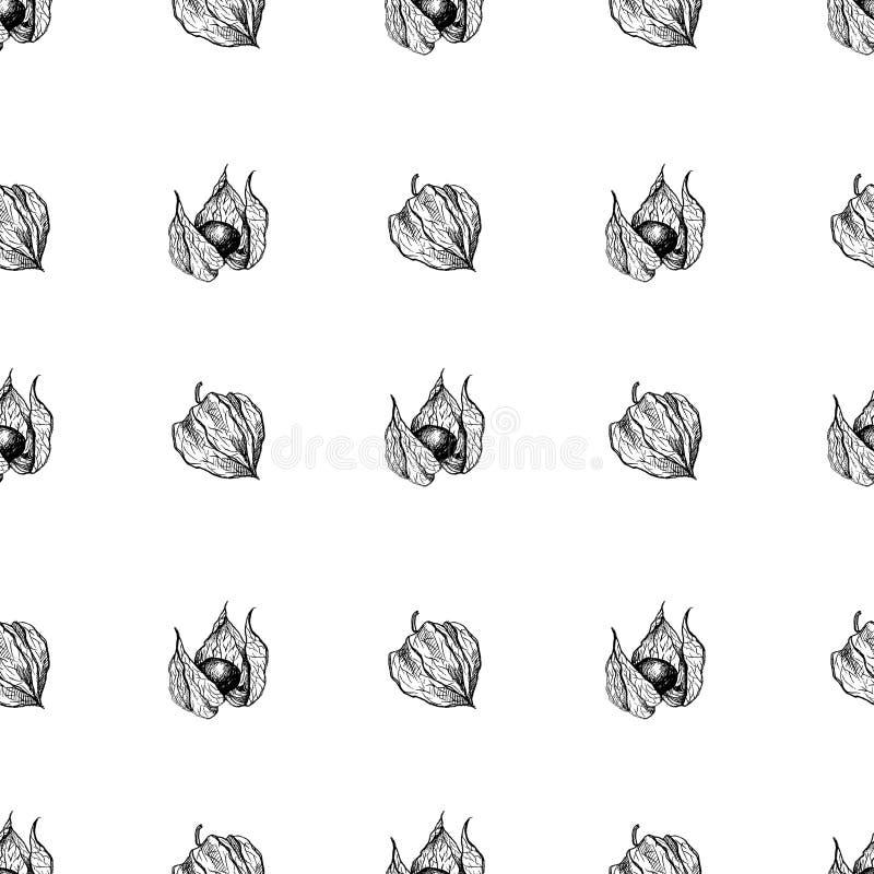 Physalis grafische die illustratie op witte achtergrond, vector naadloze patroon medische installatie, Bloemenornament wordt geïs stock illustratie