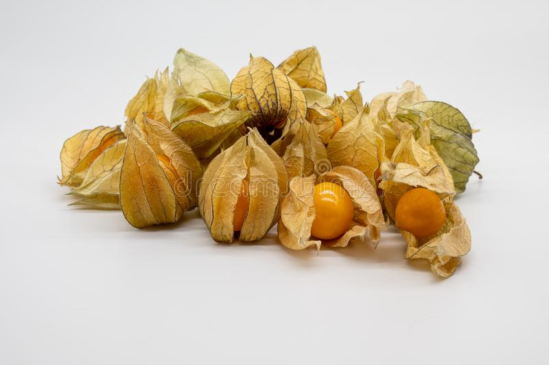 Physalis isolated on white background stock photos
