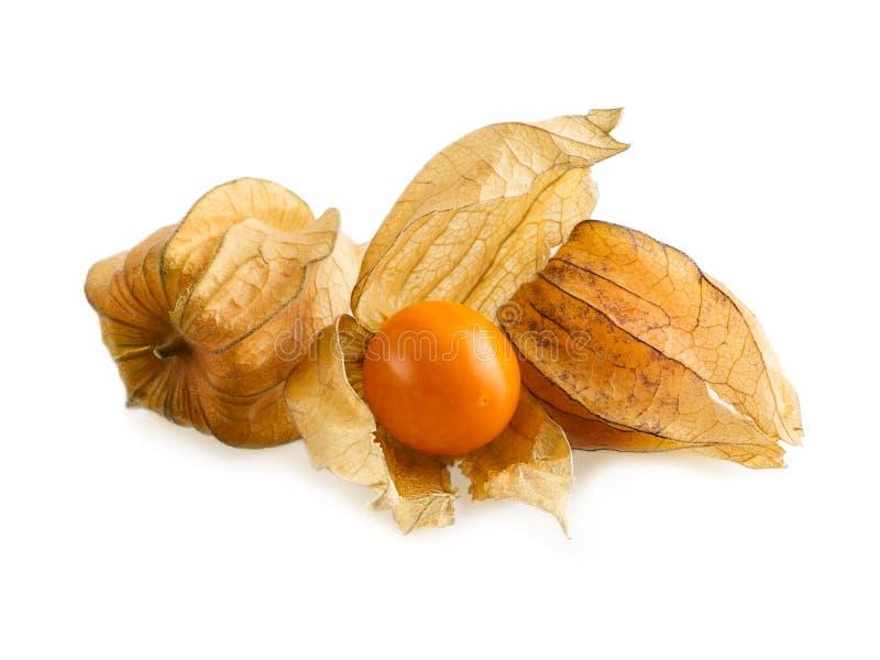 Physalis- oder Kapstachelbeerfrucht auf Weiß Reife Physalisfrüchte mit dem Kelch öffnen sich lizenzfreie stockbilder