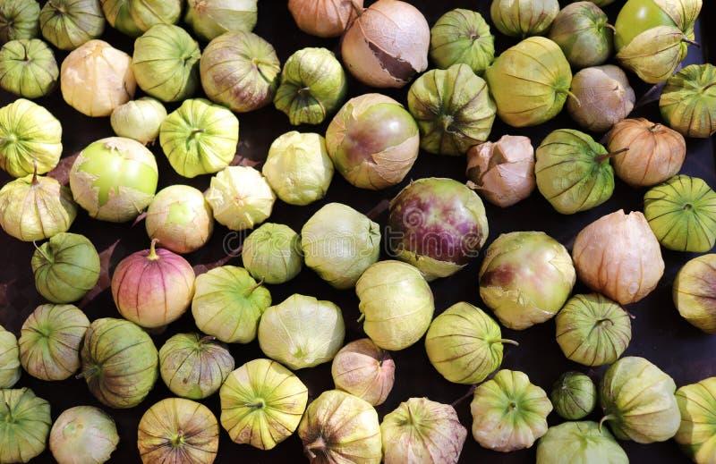 Physalis orgánico de cosecha propia de Tomatillos, preparado Crecimiento en un huerto Los makings de una gran salsa foto de archivo