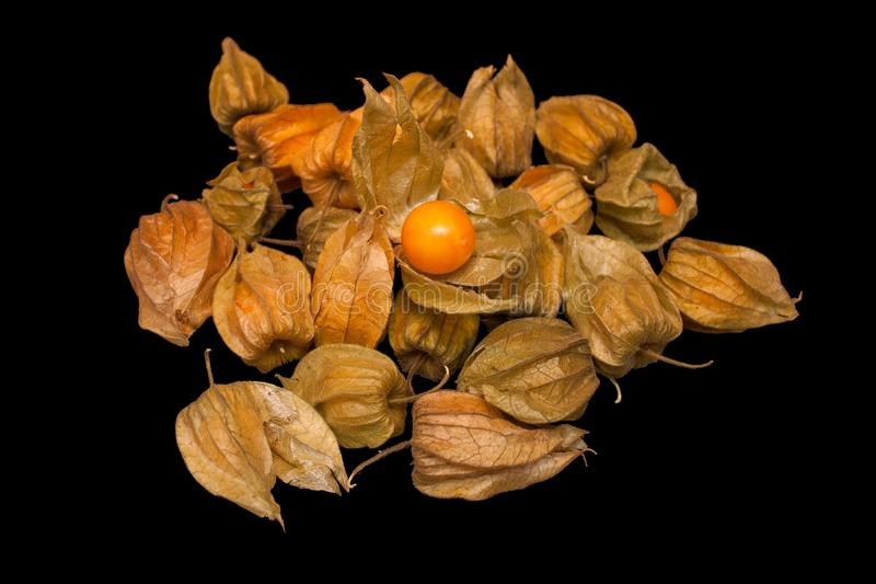 Physalis peruviana Cape gooseberry, goldenberry isolated on a royalty free stock image