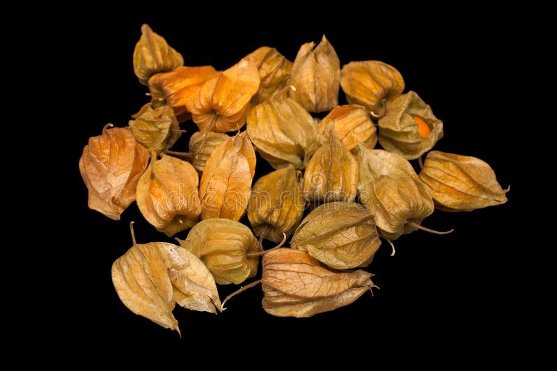 Physalis peruviana Cape gooseberry, goldenberry isolated on a royalty free stock photography