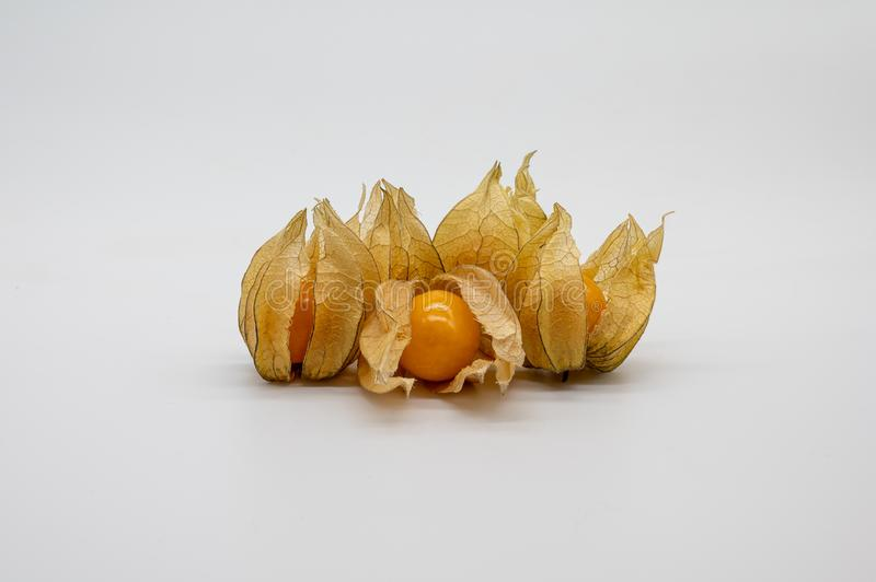 Physalis isolated on white background royalty free stock photography