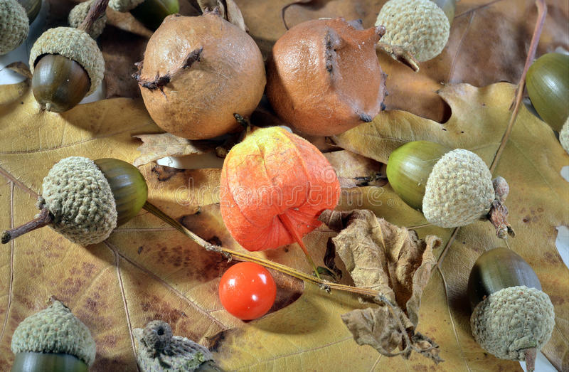 Physalis red fruit royalty free stock photo