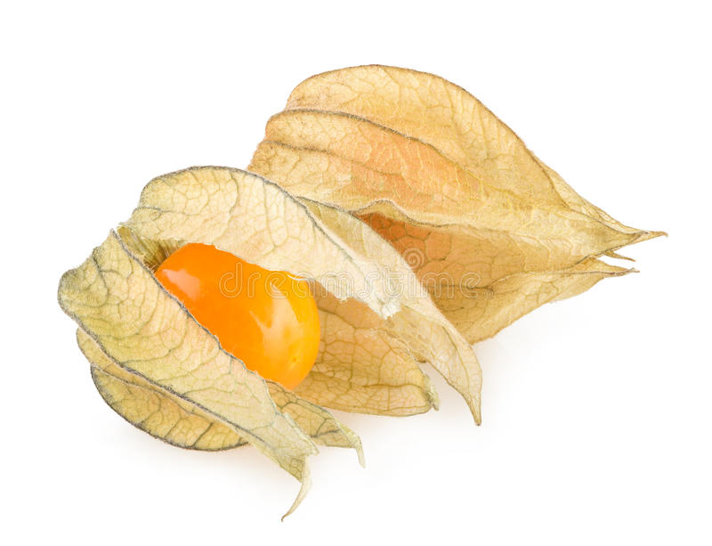 Physalis. Ripe physalis on white background stock photography