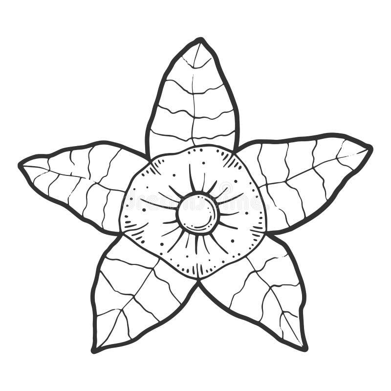 Physalis Vectorconcept in krabbel en schetsstijl royalty-vrije illustratie