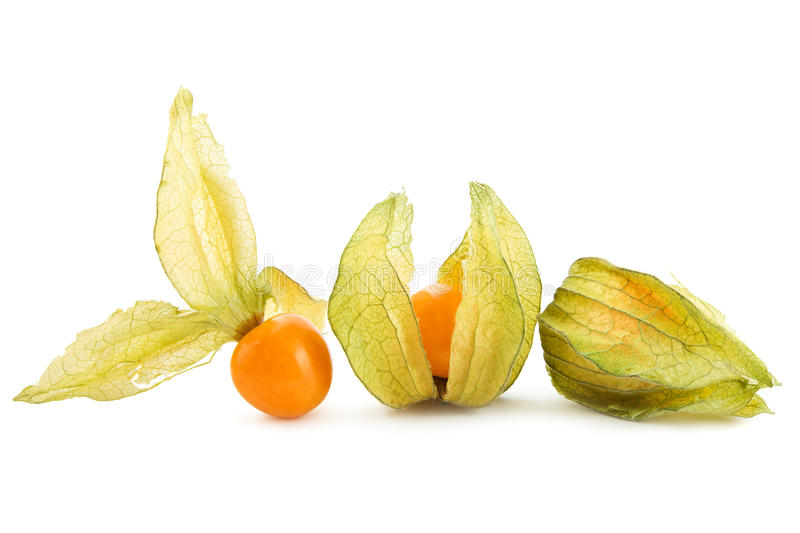 Download Physalis on white stock photo. Image of fruits, food - 21001672