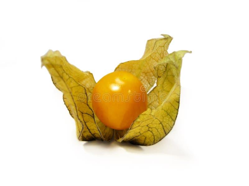 Physalisfrucht stockfoto