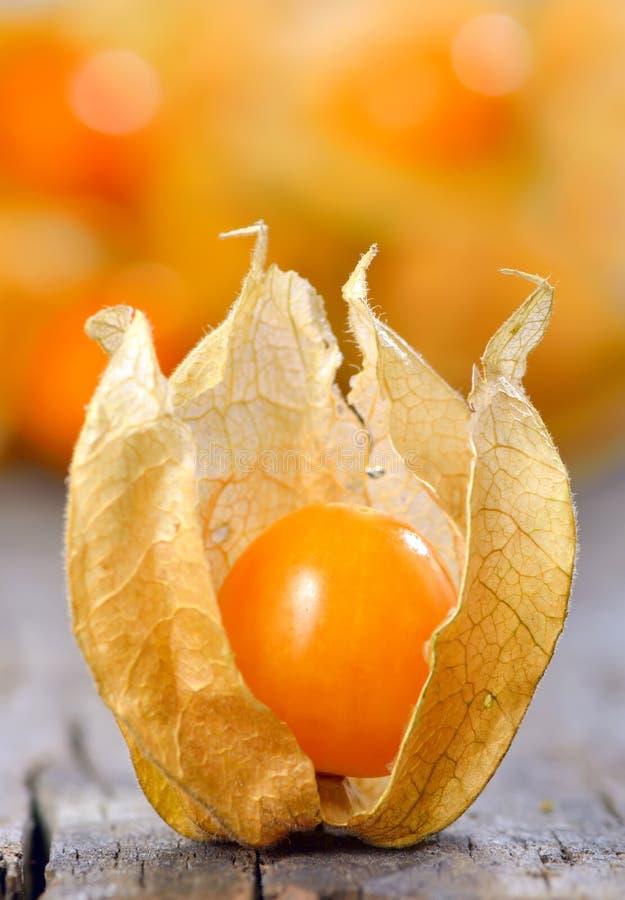 Physalisfruit royalty-vrije stock afbeeldingen