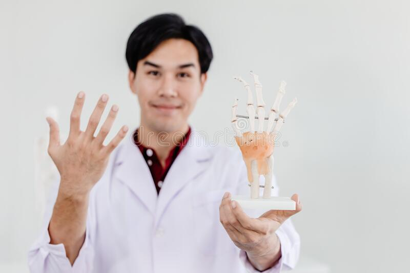 Physical Doctor with hand palm model showing anatomy in hand muscular system tendons ligaments.  stock photos