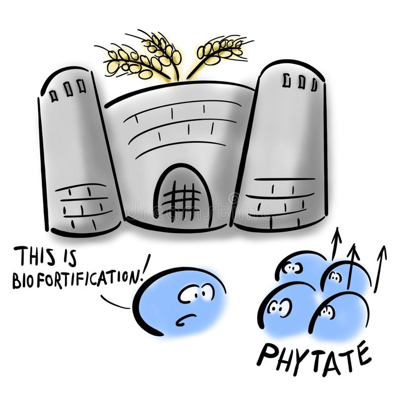 Phytates and wheat biofortification stock illustration