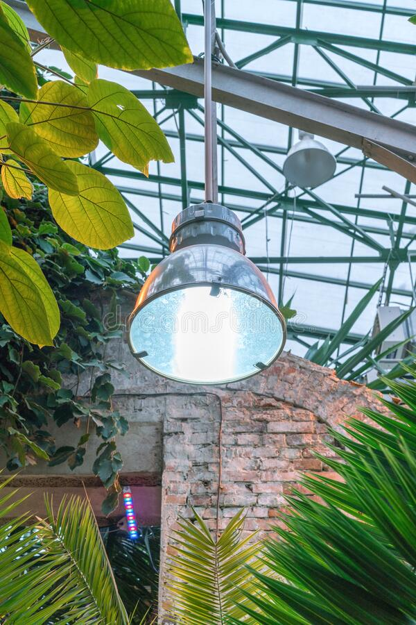 Phyto lamps for plant growth in the winter season in the greenhouse / hothouse. Artificial lighting of plants in short daylight. Conditions royalty free stock photography