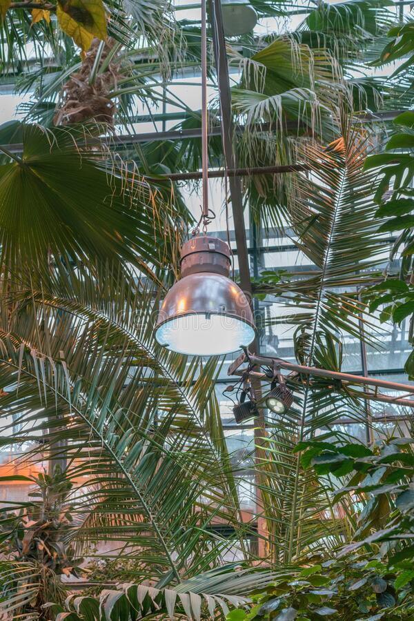 Phyto lamps for plant growth in the winter season in the greenhouse / hothouse. Artificial lighting of plants in short daylight. Conditions stock photography
