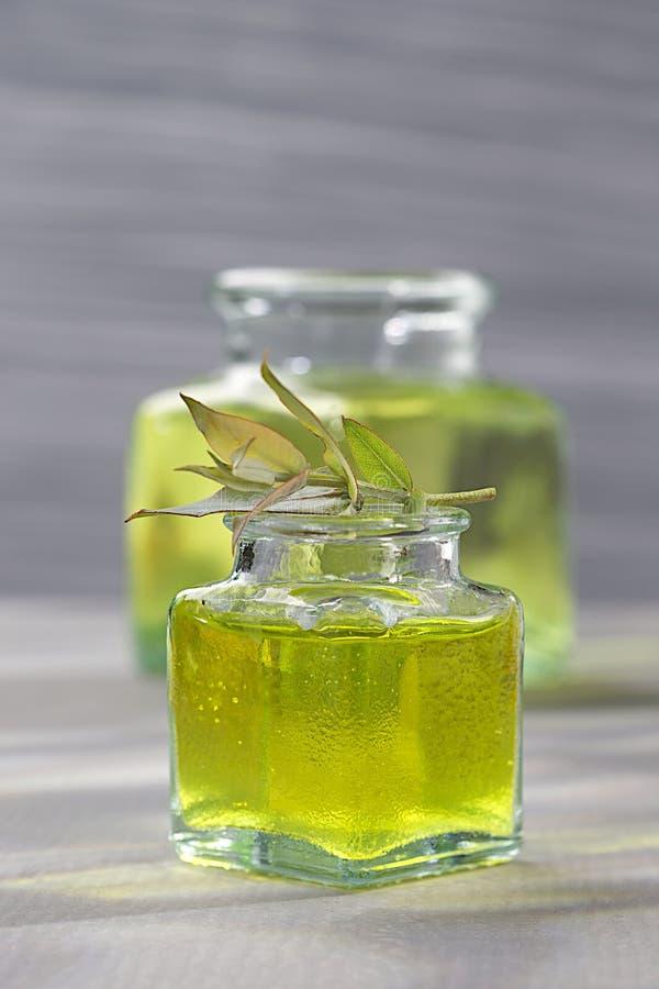 Phytotherapy - nödvändig olja för eukalyptus arkivfoton