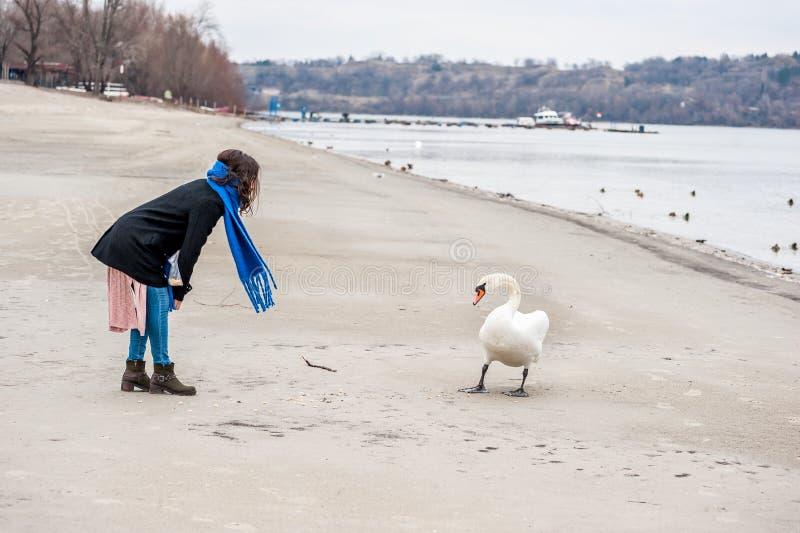 Piękna młoda dziewczyna karmi łabędź na plażowej pobliskiej rzeki lub jeziora wodzie w zimnej zimy pogodzie w czarnym żakiecie, z obrazy royalty free