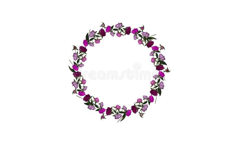 Piękna różowa peoni round rama na białym tle - ilustracja ilustracja wektor