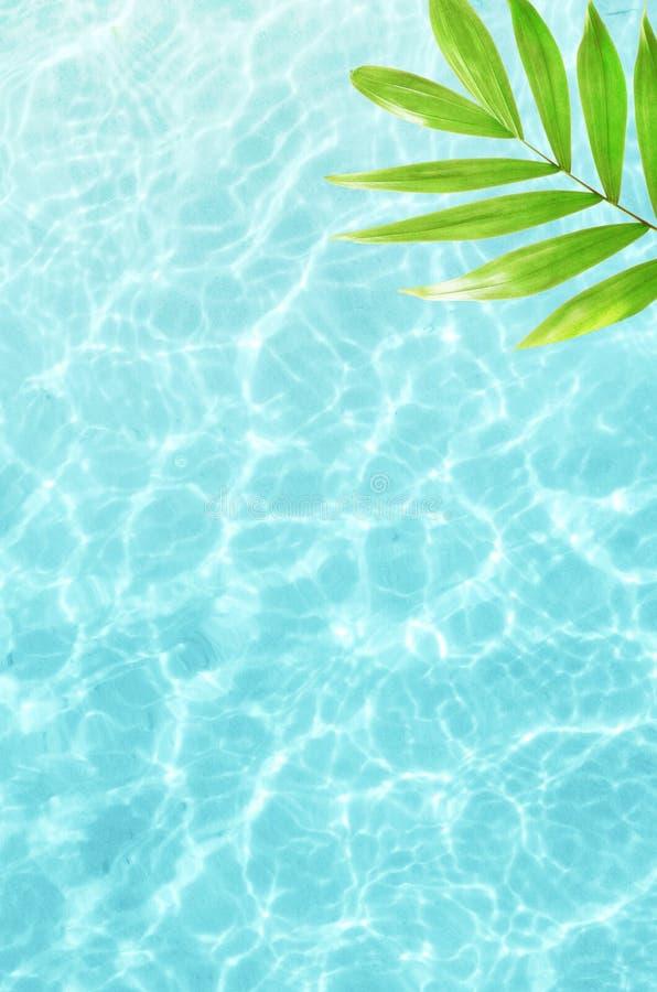 Pięknej natury zieleni palmowy liść na tropikalnym morzu Lata tło katya lata terytorium krasnodar wakacje samochodowej miasta poj zdjęcia royalty free