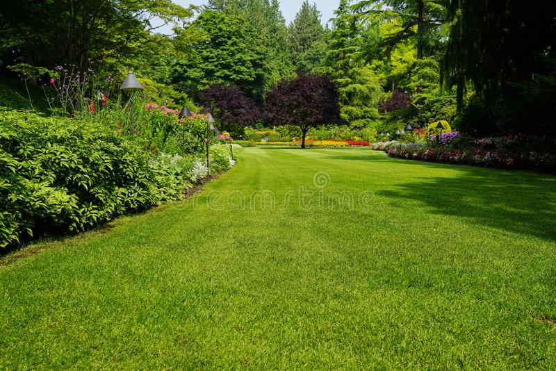 Piękni drzewa i zielona trawa w ogródzie zdjęcia royalty free