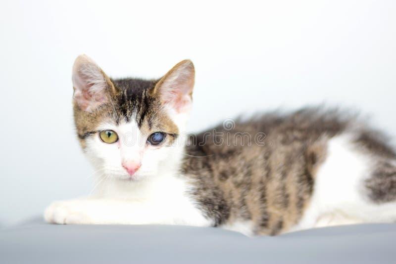 Piękni potomstwa kocą się portret, kot z kota grypa infekującym chorym okiem w weterynaryjnej klinice zdjęcie royalty free