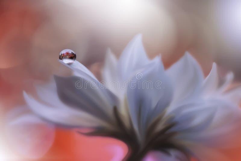 pięknie się tło charakteru wektora Artystyczna Pomarańczowa tapeta Naturalna Makro- fotografia Wiosna, biali kwiaty Kwiecista szt obrazy royalty free
