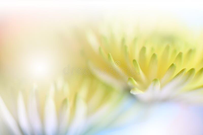 pięknie się tło charakteru wektora Kwiecisty fantazja projekt Artystyczni abstraktów kwiaty Sztuki fotografia Wiosna, lato, kreat zdjęcie royalty free