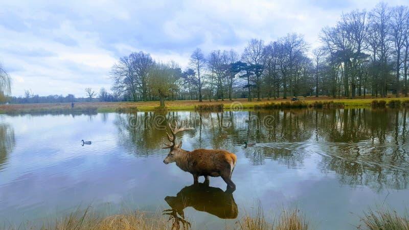 Piękno natura fotografia stock