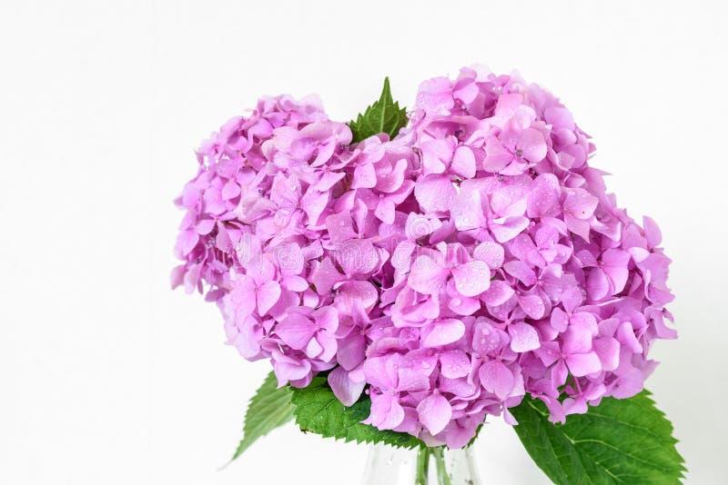 Piękny bukiet różowa hortensja kwitnie z wodnymi kroplami wiosna wakacje lub ślubny tło 2007 pozdrowienia karty szczęśliwych nowe obraz royalty free