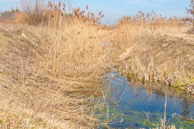 Piękny idylliczny krajobraz z pomarańczową trzcinową pobliską wodą jezioro lub staw z odbiciem i conferva zdjęcie stock
