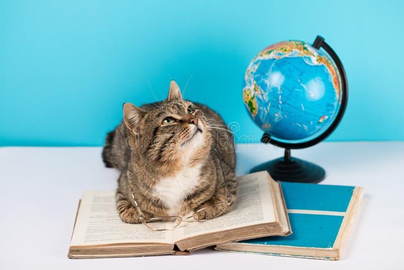 Piękny kot kłama na otwartej książce kot z szkłami i książką zdjęcie stock