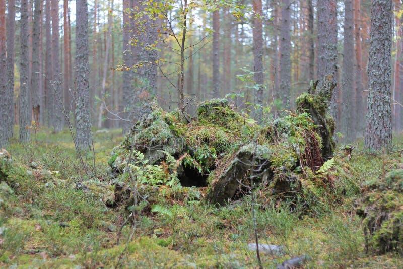 Piękny krajobraz w lesie obraz royalty free