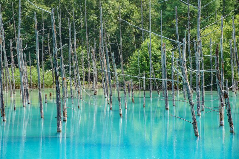 Piękny Shirogane błękita staw obrazy stock