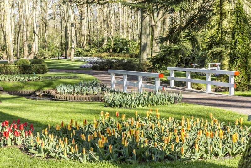 Piękny widok ogród z ścieżką, bielu most, tulipany i wiele drzewa, czerwieni i koloru żółtego fotografia royalty free